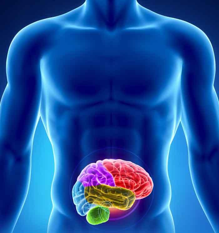 Resultado de imagen de el segundo cerebro